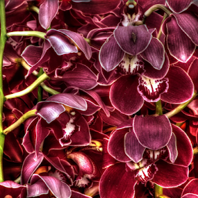 orchid by Renato Dibelčar - Flowers Flower Gardens ( canon, orchid, hdr, green, pink, flower, orchidee )