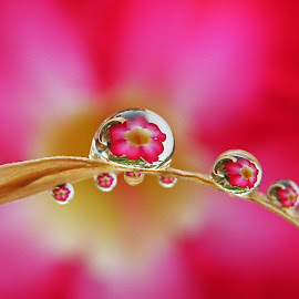 waterdrops by Suesue Khoo - Nature Up Close Natural Waterdrops ( penang, malaysia )