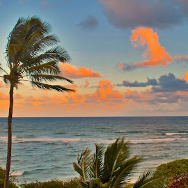 Sunset in Kauai at the beach in Kaha Lani. by D. Bruce Gammie - Landscapes Travel ( clouds, palm tree, kauai, sunset, beach )