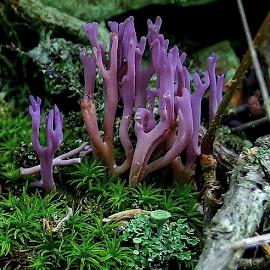 Fungi by Michael Buffington - Nature Up Close Mushrooms & Fungi ( environment, fungi, purple, nature, green, fungus, close up, natural )