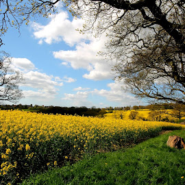 Rapeseed Field - Today in Battle by Sam Kirimli - Landscapes Prairies, Meadows & Fields