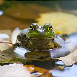 Smiley by Dennis Ba - Animals Amphibians ( frog )