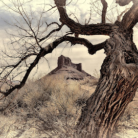 Ancient Tree Frame by Jeff Clow - Landscapes Deserts ( ancient, desert, mountain, butte, frame, gnarly, tree, utah, erect, landscape photography, landscape, usa )