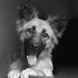 dog by Robby Montolalu - Animals - Dogs Portraits ( sangihe, indonesia, north sulawesi, tahuna )