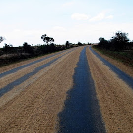 Stripes in Nature by Hayley Curtis - Abstract Patterns ( nature, path, bush, kruger, road, landscape )