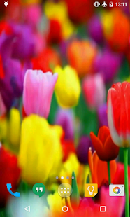 Tulips Live Wallpaper - screenshot