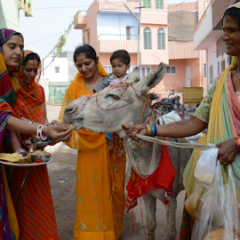 Worship of Donkey by Rakesh Sharma - News & Events Health ( worship of donkey, sheetala astami godess ride donkey )