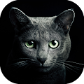 Game Find a Cat apk for kindle fire