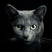 Game Find a Cat version 2015 APK