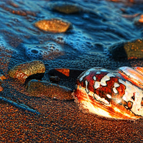 Bodrum by Berrin Aydın - Nature Up Close Other Natural Objects ( holiday, summer, turkey, seaside, morning,  )