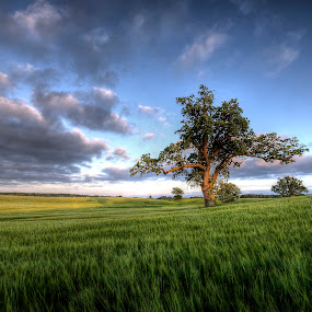 Mid-summer at Vesterborg by Kim  Schou - Landscapes Prairies, Meadows & Fields ( clouds, tree, hdr, vesterborg, fields )