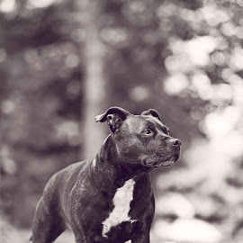 by Rob Giannese - Animals - Dogs Portraits