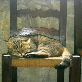 Alicante Castle Cat by Helen Roberts - Animals - Cats Portraits (  )