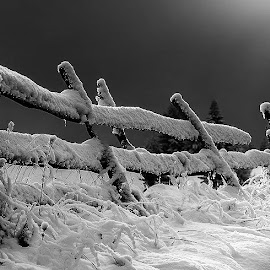 Morning by Laci Erdős - Black & White Landscapes