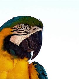 Something to Say by Richard Timothy Pyo - Animals Birds