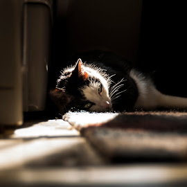 Sam by Matt McEuen - Animals - Cats Portraits ( leading lines, ky, cat, windowlight, lazy,  )
