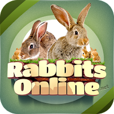 Rabbit Forum