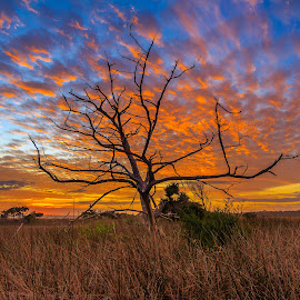 Winter tree in Florida by Jason Green - Landscapes Prairies, Meadows & Fields ( staugustine, life, winter, florida, marsh )
