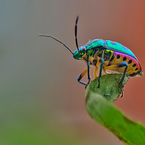Colourful Existence : A Macro by Chiradeep Mukhopadhyay - Animals Insects & Spiders ( macro, wildlife, bug, insect, animal )
