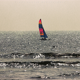 sET sAIL by Raj Padia - Transportation Boats ( watersport, goa, sea, sail, seascape, fun, setsail )