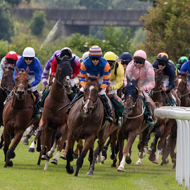 Into the home straight by Peter McLean - Sports & Fitness Other Sports ( jockeys, horse race, horses, leader, colours )