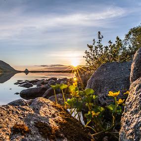 Flowers between rocks by Benny Høynes - Nature Up Close Rock & Stone ( water, islands, flowers, rocks, norway )