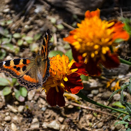 Butterfly by Madhurima Das - Nature Up Close Gardens & Produce