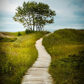 Path to the Lake by Jayne Gulbrand - Landscapes Prairies, Meadows & Fields ( wisconsin, state park, path, trees, harrington beach, boardwalk )