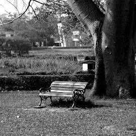 Feeling Lonely by Solomon Sarkar - City,  Street & Park  City Parks ( chair, park, black and white, lonely, city )