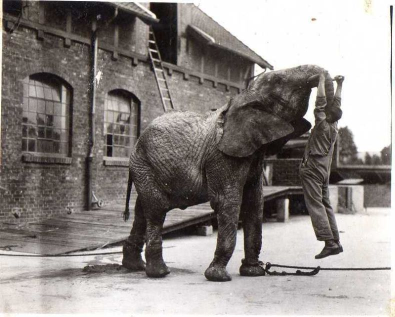 Photos Of Moscow Zoo in the 1920