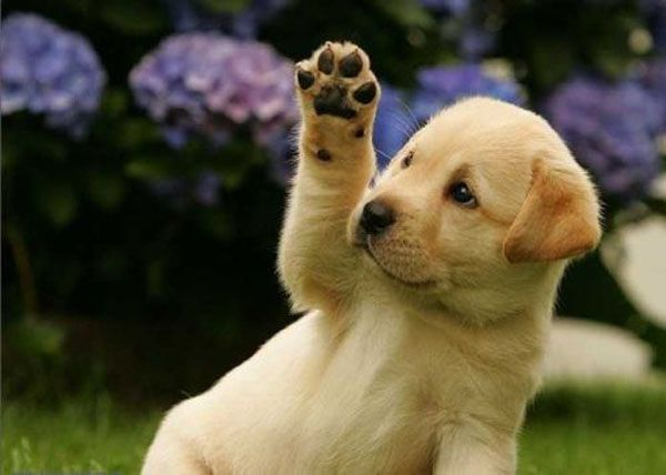 Cute Dogs : Don't You Just Want To Give Them a Pat