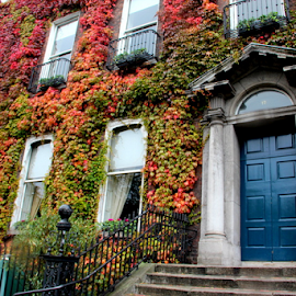 The best wall decoration by Amanda Nystrom - Buildings & Architecture Other Exteriors ( ireland, color, dublin, colorful building, flowered building )