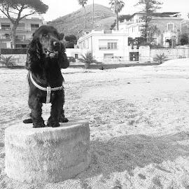 dog statue by Francesca Pierini - Animals - Dogs Portraits ( dog )