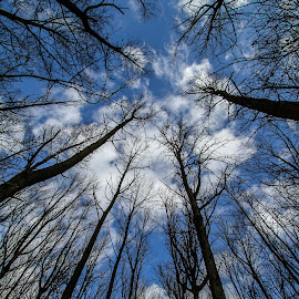Reach for the sky by Garry Chisholm - Nature Up Close Trees & Bushes ( garry chisholm, sky, nature, tree )