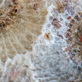 by Brian Sendler - Nature Up Close Rock & Stone