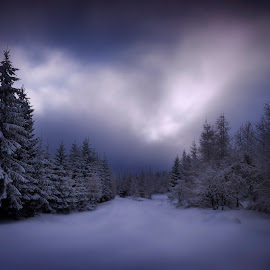 fairy tale by Michal Mierzejewski - Landscapes Mountains & Hills ( ski, clouds, wild, wind, mierzejewski, snowflake, snowy, wildlife, werol, road, landscape, storm, tales, poland, winter, tree, blue, snow, night, jakuszyce, michal )