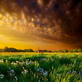 Passing By by Phil Koch - Landscapes Prairies, Meadows & Fields ( vertical, photograph, farmland, yellow, storm, leaves, love, sky, tree, nature, autumn, shadow, snow, flower, deer, wind, orange, twilight, agriculture, horizon, portrait, dawn, winter, environment, season, national geographic, serene, trees, floral, inspirational, natural light, wisconsin, phil koch, spring, photography, sun, farm, ice, horizons, rain, inspired, clouds, office, park, green, scenic, morning, shadows, wild flowers, field, red, blue, sunset, fall, peace, meadow, summer, sunrise, earth, landscapes,  )