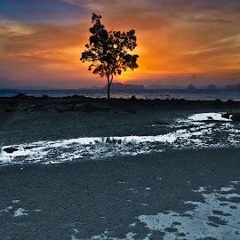 A Krabi tree by Andrial Kusuma - Nature Up Close Trees & Bushes ( bangkok, tree, sunset, landscape, krabi )