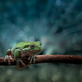 yok lompat by Alonk's Roby - Animals Amphibians