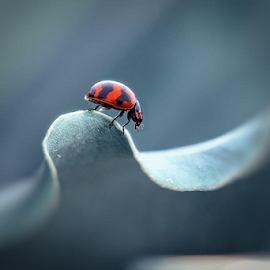 bug's and the wave by Budi Cc-line - Animals Insects & Spiders ( bugs, waves, nature up close )