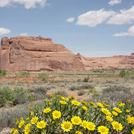 Wildflowers Arches National Park, Utah by Stephen Terakami - Novices Only Flowers & Plants
