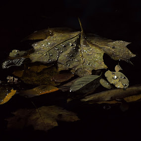 A Gathering of Leaves by Liz Crono - Nature Up Close Leaves & Grasses ( water, autumn, floating, leaves, gathered, fall, color, colorful, nature )