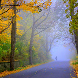 Misty Morning by Colleen Schueler - Landscapes Weather ( fall colors, autumn leaves, fog, fall, trees, autumn colors, autumn trees, mist )