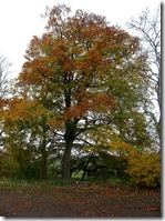 autumn eddleston tree