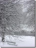 today's snow 005