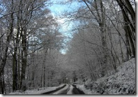 snowy trees on back road