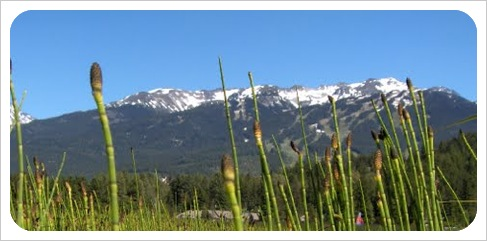 whistler in the summer