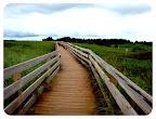 dune path pei