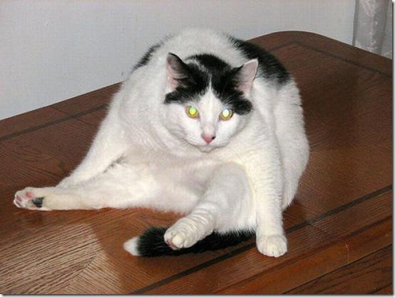 fat_cats_24