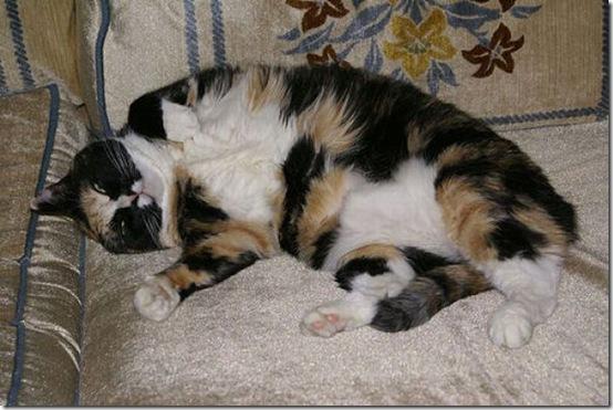 fat_cats_38